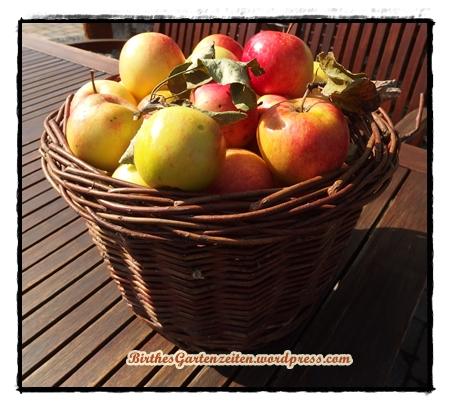 Äpfel, Apfelernte, Sept. 2014